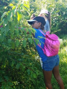 Campers started their day of focus on the right to work by working in Koinonia's blueberry orchard!